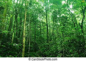 Bosque denso tropical