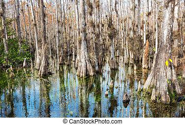 Bosque en Everglades