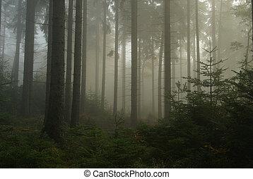 Bosque en niebla 14