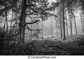 Bosque espeluznante