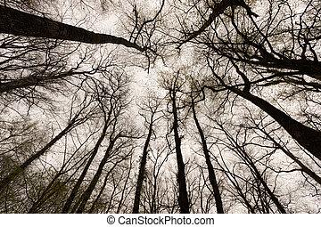 bosque, invierno, ramas