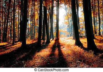 Bosque místico