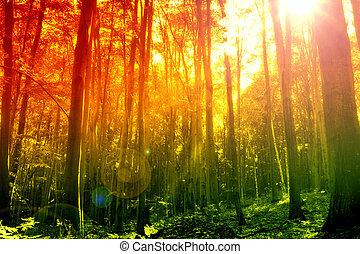 Bosque místico con rayos solares
