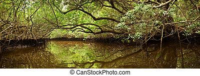 Bosque Mangrove en Florida