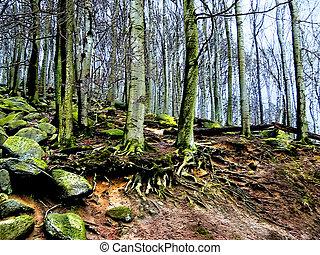 Bosque misterioso