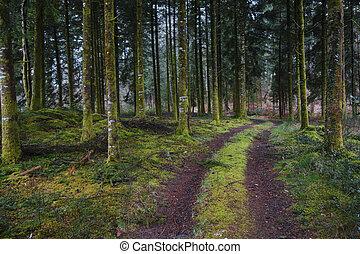 Bosque misterioso y oscuro