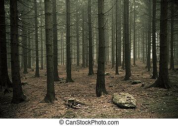 Bosque Misty
