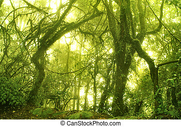 Bosque Mossy