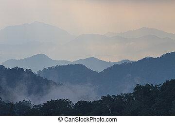 Bosque oscuro y soñado con niebla