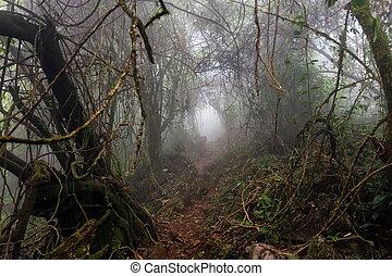 Bosque oscuro y sombrío