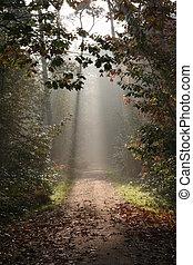 bosque, otoño