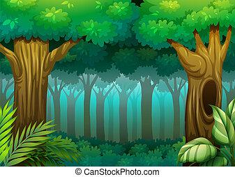 bosque, profundo
