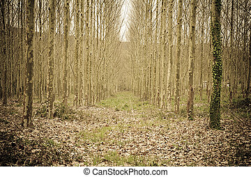 Bosque soñado