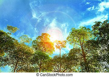 Bosque soleado temprano en la mañana