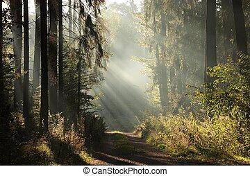 Bosque sombrío de otoño al amanecer