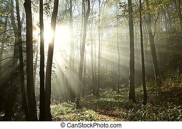 Bosque sombrío de otoño