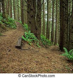 bosque, switchback, verde, oregón