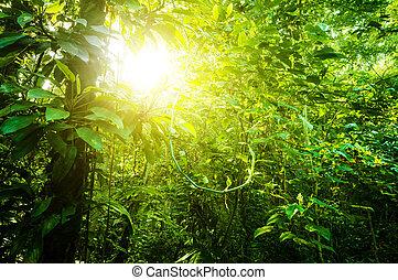 Bosque tropical natural