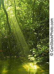 Bosque verde con reflejo de agua