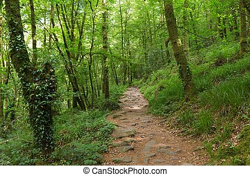 Bosque verde en Francia
