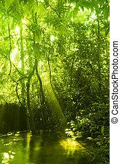 Bosque verde y corriente.