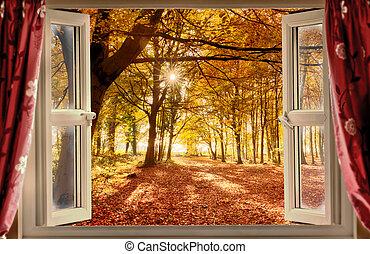 bosque, vista, ventana, abierto, otoño
