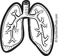 bosquejo, pulmón, humano