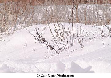 Bosques de invierno, árboles, arbustos