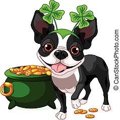 Boston Terrier celebra San Pat