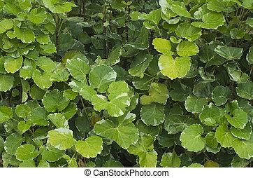 Brillantes arbustos verdes