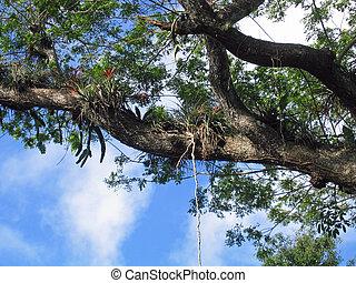 Bromeliads sobre un árbol