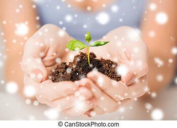 brote, suelo, verde, manos