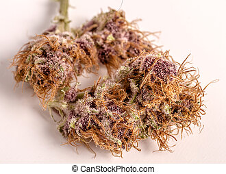 brotes, marijuana