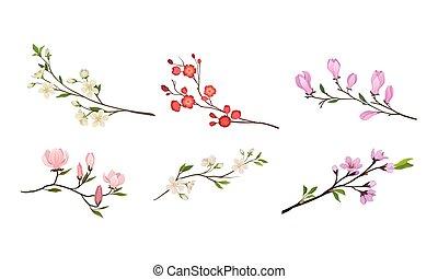 brotes, ramas, vector, florecer, árbol, oferta, conjunto, ramitas, flor