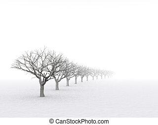 brumoso, árboles invierno, neblina, oscuro, día