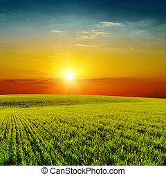 Buen atardecer naranja sobre el verde campo de primavera