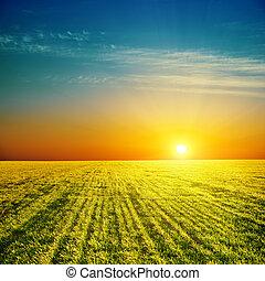 Buena puesta de sol sobre el campo verde