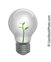 Bulbo con planta dentro