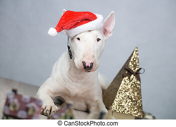 Bull terrier dog con sombrero de Santa en Navidad