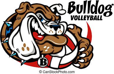Bulldog con voleibol