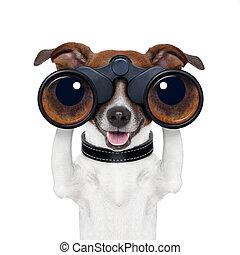 buscando, observar, binoculares, perro, mirar