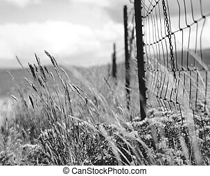 BW Fance and Field