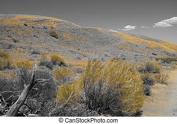BW paisaje amarillo del desierto madera 2