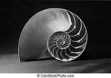 cáscara, patrón, nautilus, negro, blanco, geométrico