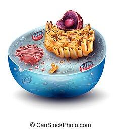 célula, estructura