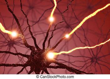 célula, nervio, pulso
