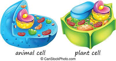 Células de animales y plantas