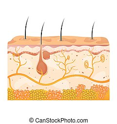 Células de piel