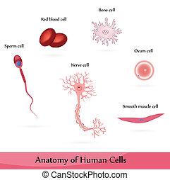 Células humanas