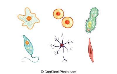 células, humano, vector, infografic, elementos, ilustración, colección, diferente, anatomía, tipos